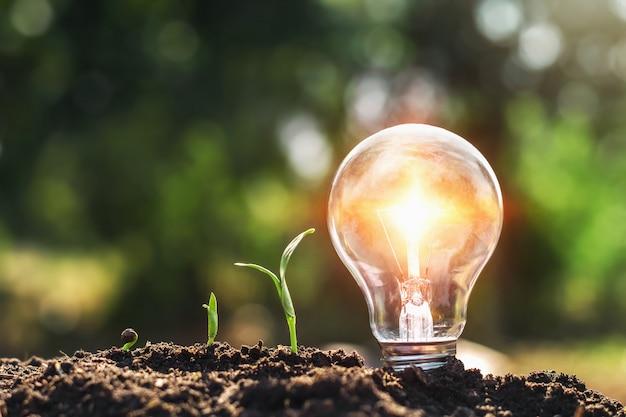 Glühlampe auf dem boden- und jungpflanzenwachsen Premium Fotos