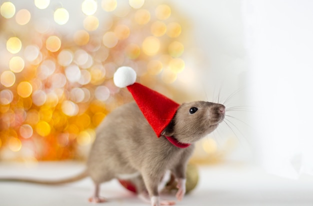 Goldene braune niedliche kleine ratte in einem hut des neuen jahres auf dem weichen licht Premium Fotos