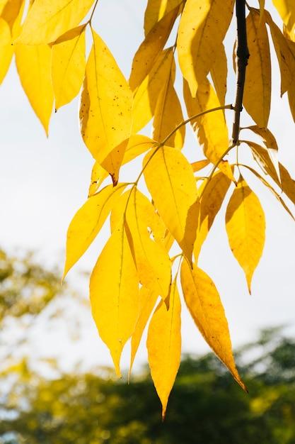 Goldener herbstlaub mit unscharfem hintergrund Kostenlose Fotos