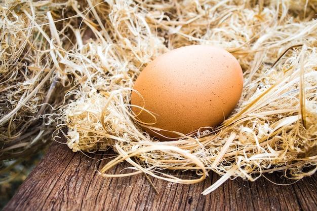 Goldenes ei im nest Premium Fotos