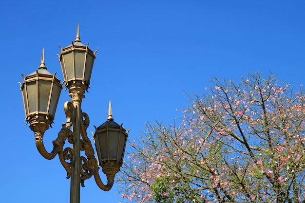 Goldfarbener nobler laternenpfahl mit blühendem silk floss-baum gegen klaren blauen himmel in buenos aires Premium Fotos