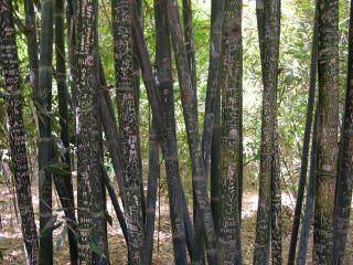 Graffiti auf bambus Kostenlose Fotos