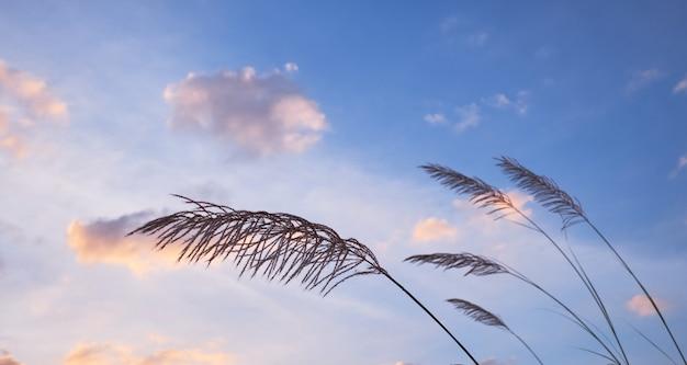 Gras mit bewölktem himmel am windigen tag Premium Fotos