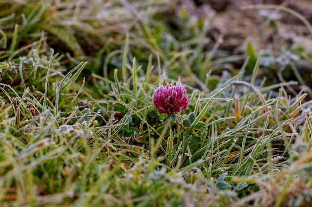 Gras mit erstem frost, undeutlicher hintergrund Premium Fotos