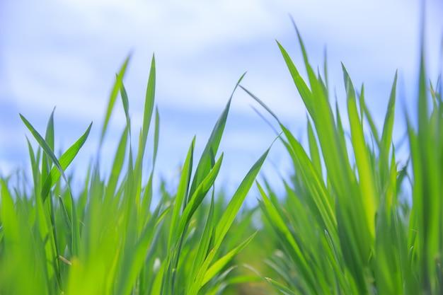 Gras nahaufnahme. Kostenlose Fotos