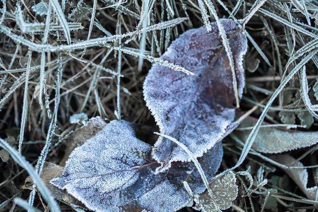 Gras und blätter wurden am frühen, kalten morgen im licht der aufgehenden sonne mit morgenfrost gefroren. Kostenlose Fotos