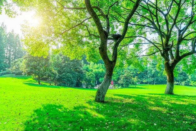 Gras und grünes holz im park Premium Fotos