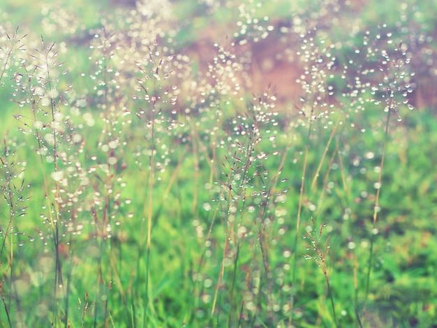 Graswiese mit wasser fällt, nachdem es geregnet hat Premium Fotos