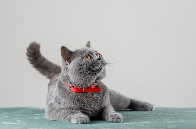 Graue katze, die liegt und aufschaut Kostenlose Fotos