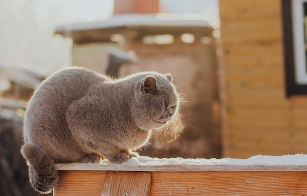 Graue katze sitzt im winter im schnee und friert ein Premium Fotos