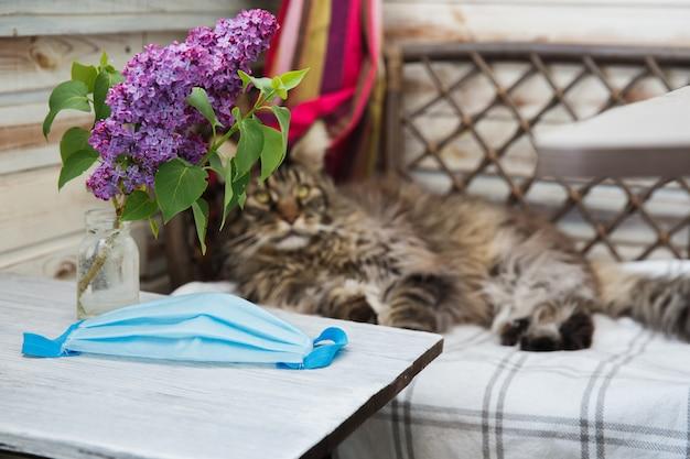 Graue maine coon katze liegt auf dem bett. tiergesundheit. coronavirus-krankheit bei katzen und tieren. atemschutz. Premium Fotos