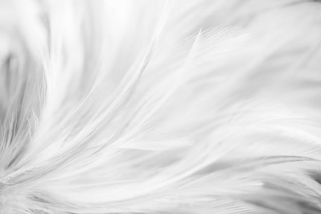 Graue vogel- und hühnerfedern in der weichen und unschärfeart für den hintergrund. dunkler ton Premium Fotos