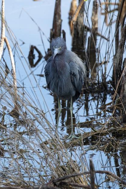 Grauer vogel auf baum Kostenlose Fotos