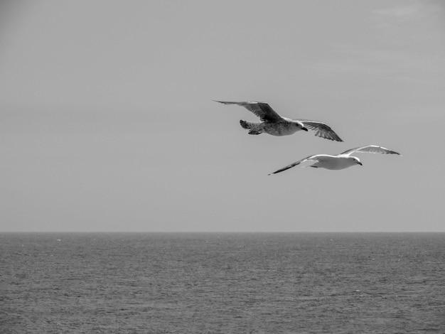 Graustufen von zwei sprengvögeln, die auf dem meer fliegen Kostenlose Fotos