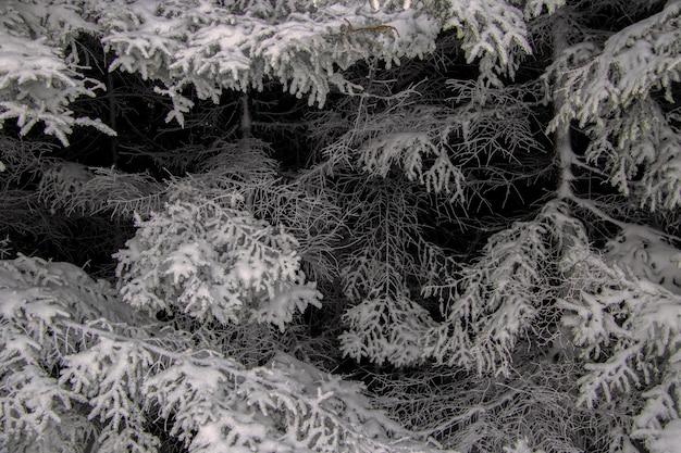 Graustufenaufnahme von schneebedeckten bäumen im winter Kostenlose Fotos