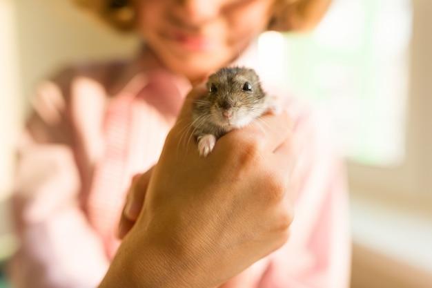 Gray dzungarian-hamster in den händen seines kleinen inhabers Premium Fotos