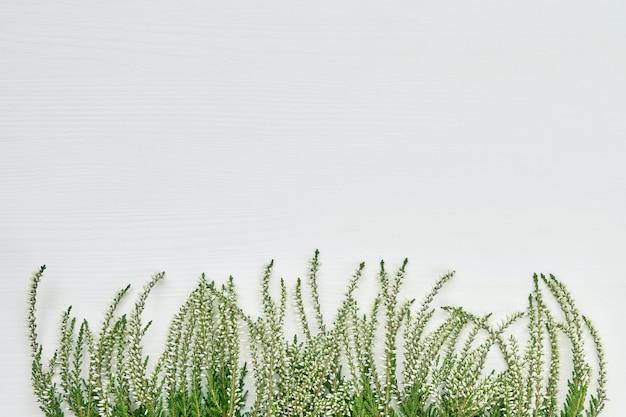 Grenze von fehlern der weißen gemeinen heide auf weißem hintergrund. textfreiraum, ansicht von oben. Premium Fotos