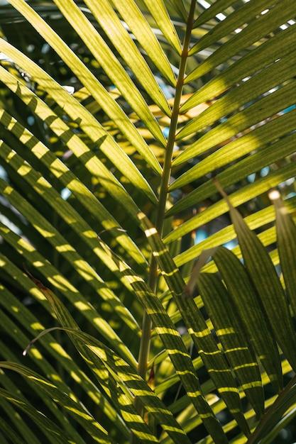 Große palmblätter bedeckt im sonnenlicht mit blauem himmel Kostenlose Fotos