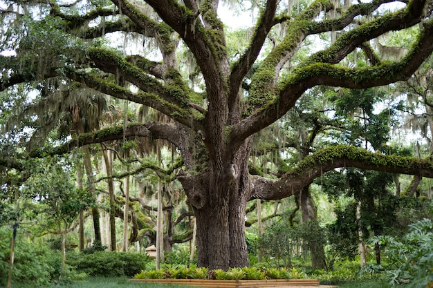 Großer baum bedeckt mit grün und moosen in einem park Kostenlose Fotos