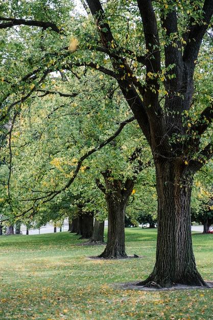 Großer baum im park Kostenlose Fotos