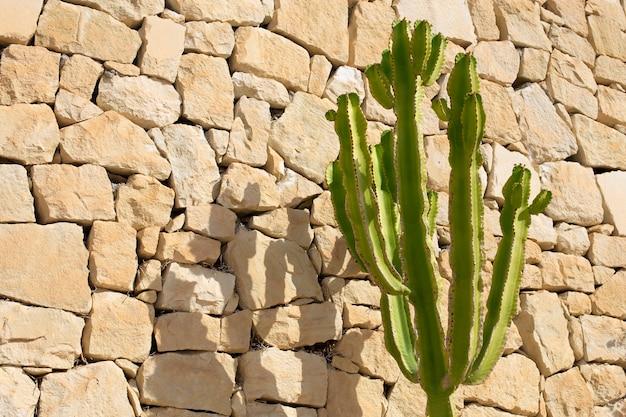 Großer kardonkaktus vor dem hintergrund einer steinmauer. speicherplatz kopieren. Premium Fotos