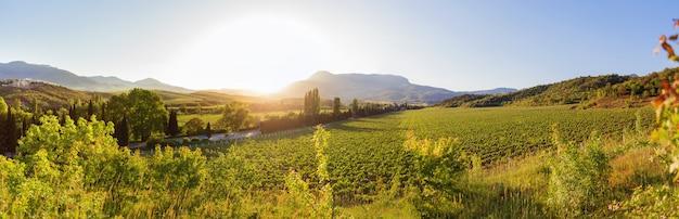 Großer panoramablick auf weinberge bei aluschta Premium Fotos