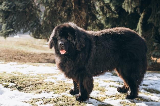 Großer Schwarzer Hund Draußen Im Park Download Der Kostenlosen Fotos