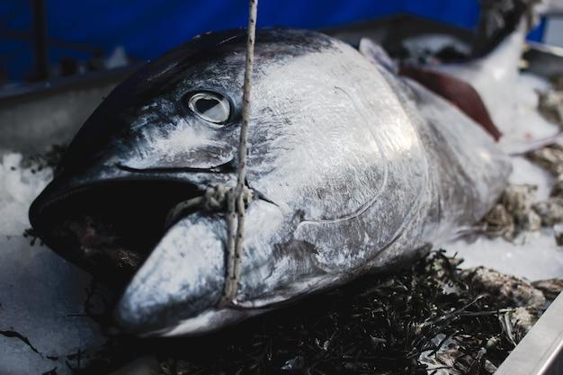 Großer thunfisch im nahrungsmittelmarkt Kostenlose Fotos