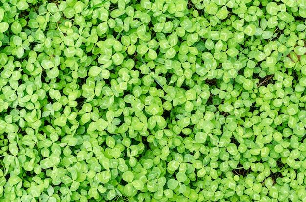 Grün hinterlässt hintergrund Premium Fotos