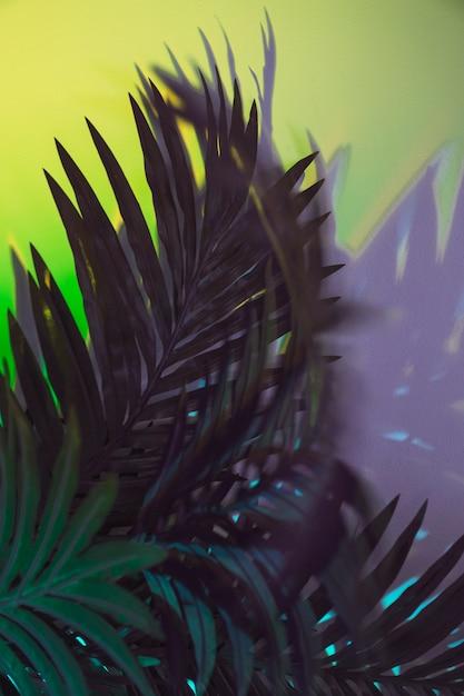 Grün lässt anlage auf farbigem hintergrund Kostenlose Fotos