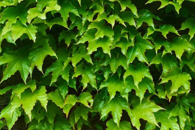 Grün lässt tropischen organischen beschaffenheitshintergrund Premium Fotos