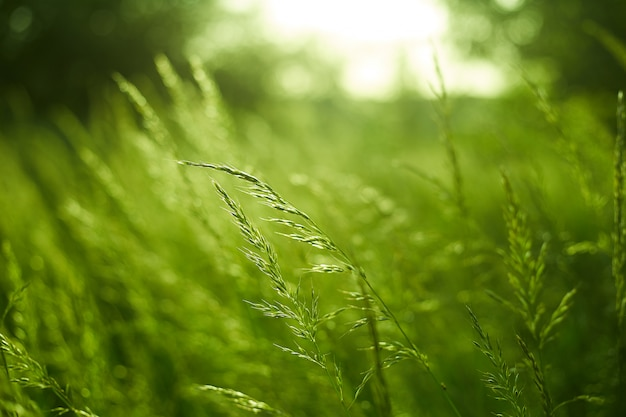 Grün verschwommener raum und sonnenlicht Premium Fotos