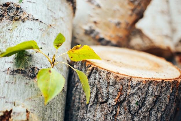 Grünblätter auf einem gefällten baum auf einem keil, naturschutz Premium Fotos