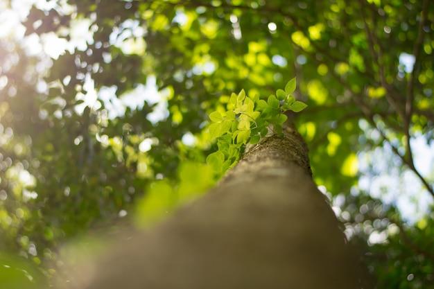 Grünblätter auf grünem baumhintergrund Premium Fotos