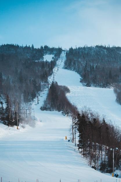 Grüne bäume, die tagsüber mit schnee bedeckt sind Kostenlose Fotos