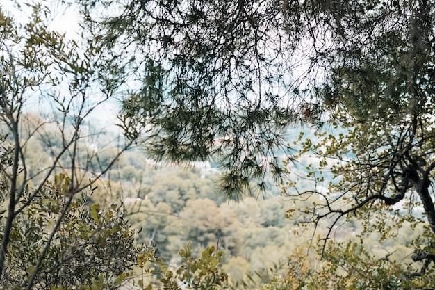Grüne bäume im wald Kostenlose Fotos