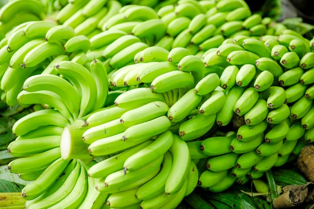 Grüne bananenstaude Premium Fotos