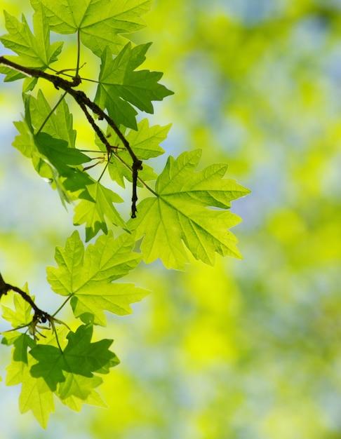 Grüne blätter auf einem ast Premium Fotos