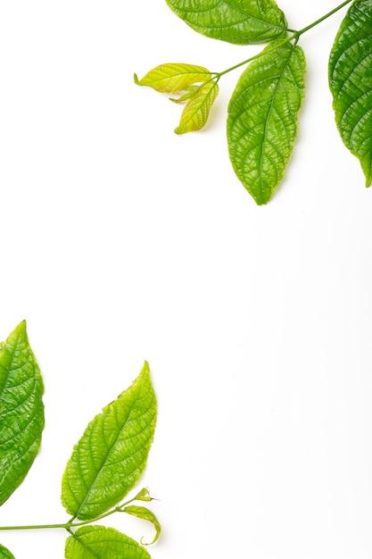 Grüne blätter gestalten den abstrakten hintergrund, der auf weiß lokalisiert wird Premium Fotos