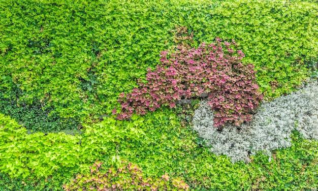 Grüne blätter Kostenlose Fotos