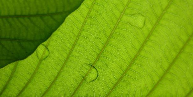 Grüne blattbeschaffenheit der nahaufnahme mit tropfenwasser Premium Fotos