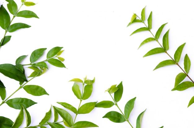 Grüne blattbeschaffenheit. draufsicht des blattbeschaffenheitshintergrundes Premium Fotos