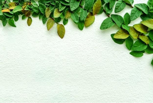 Grüne blattgrenze, isolat der anlage auf der wand im garten Premium Fotos