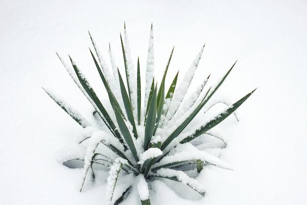 Grüne blume bush unter schnee Premium Fotos