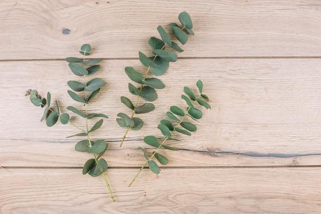 Grüne eukalyptus populusblätter und -zweige auf hölzernem strukturiertem hintergrund Kostenlose Fotos
