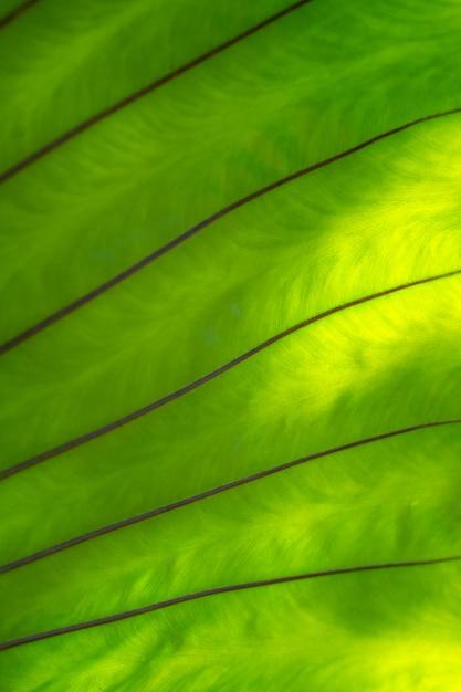 Grüne farnblattzweige Premium Fotos