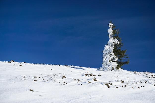 Grüne fichte mit der hälfte davon mit schnee bedeckt Kostenlose Fotos