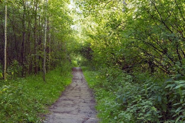 Grüne gasse mit ländlichem fußweg Premium Fotos