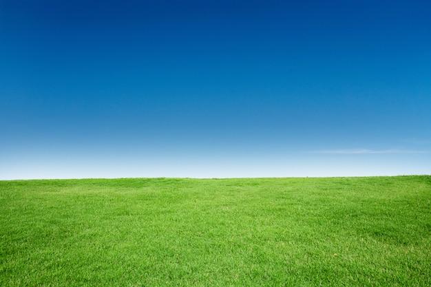 Grüne gras-beschaffenheit mit blang copyspace gegen blauen himmel Premium Fotos