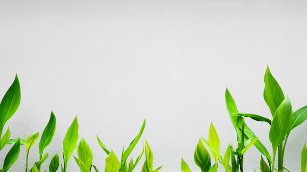 Grüne kleine pflanzenblätterfrontseite eine weiße wand Premium Fotos